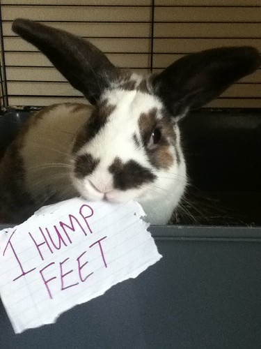 Alan Shaming by Nina J. G., on Flickr