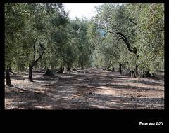 oro verde (peter pan 2011) Tags: verde canon eos reflex foto 500 puglia vieste oro gargano foggia