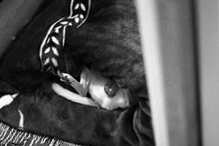 balls out (theyetta) Tags: wickerpark signs tattoo vintage puppies chinatown cta chinesefood searstower spin vinyl balls blues tourist fieldmuseum pizza thrift bakery soul ferriswheel macys navypier jewlery theloop michiganavenue pastries fleamarket statestreet finds marshallfields lakefront skydeck zines bookstores dunkindonuts swapmeet magnoliacupcakes orangeline maxwellstreet soldierfield oldstuff skyscrapper southernfood quimbys boutiques giftshops milliniumpark ragstock littlevillage nishika chromebags boringstore swatmeet kumascorner chromeindustries newhavenstyle willistower mildblend piecepizzeria belmontandhalsted lakeviewboystown chromechicago