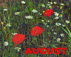 August AMG Bookmark:poppies and daisies (virtually_supine popping in and out) Tags: bookmark icon wildflowers meadow daisies poppies composite vividcolour photomanipulation artisticmanipulationgroup photoshopelements9 seacourtnaturereserve botley oxford