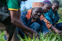 Climate smart brachiaria: Tanzania