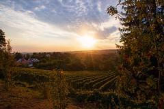 Before Sunset (FocusPocus Photography) Tags: hohenasperg festung fortress abend evening sonnenuntergang sunset landschaft landscape aussicht view weinberge vineyards