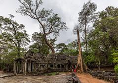 Ta Prohm, Angkor (Siem Reap) (bienve958) Tags: camboia siemreap taprohm krongsiemreap camboya kh khmerkingjayavarmanvii mahayanabuddhist angkor temple angkoriantemples worldheritageunesco trees colefranaisedextrmeorient patrimoniodelahumanidadunesco ficusgibbosa arbol cambodia arquitecturajemer estilobayon