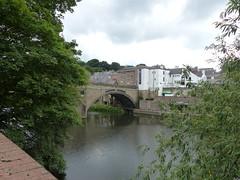 P1110331 (jrcollman) Tags: plants splant salix framwelgatebridgedurham riverwear durham bridges