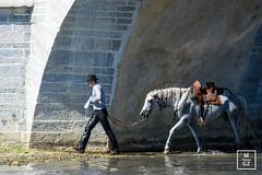 Abrivado (Milena Gz) Tags: abrivado horses summer