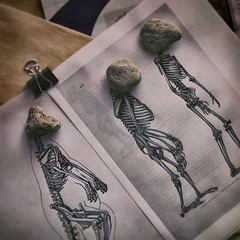 Stone Age (chalkdog) Tags: utata:project=ip239 rocks binderclip skeletons papers office