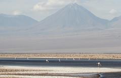 Flamingos on Lake Chaxa (Med Gull) Tags: zegrahm chile peru cruise expedition wildlife southamerica atacama sanpedrodeatacama lakechaxa lake salt saltpan flamingo andeanflamingo