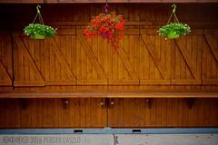 PLW_5534 (Laszlo Perger) Tags: wien vienna österreich austria blumengarten hirschstetten flowergarden