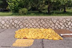 Drying corn, Kaesong (George Pachantouris) Tags: dprk north korea pyongyang kim ilsung jongil jongun communism socialism
