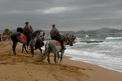 DSC_5740 (ichauvel) Tags: sea horse woman mer man france beach cheval europe waves femme vagues fréjus plage var homme cavaliers