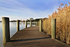 The Boardwalk (jimmy2407) Tags: park australia victoria altona cherrylake