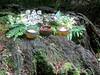 Altar for Thor (Thorskegga) Tags: wood uk england english woodland britain buckinghamshire ceremony offering british thor bucks pagan blot heathen asatru heathenry naphill