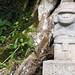 Statua nella giungla (3)