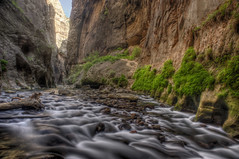Garden Wall (daveinhst) Tags: park fern green rock river utah sandstone whitewater canyon hike rapids virgin national zion slot hdr narrows 489 070212