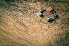 Mosca, pircing y pezn (fertraban) Tags: bear man oso fly teta mosca hombre pelo insecto pecho pezn pircing vello velludo