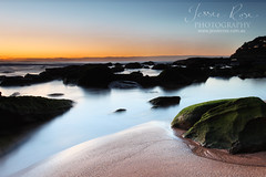 Whale Beach Dawn (Jessie Rose Photography) Tags: ocean longexposure beach silhouette rock sunrise moss northernbeaches whalebeach