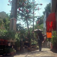 kaminakazato03-film66 (yaplan) Tags: flower green film japan ikoflex memory 散歩 6×6
