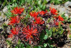 Little Paintbrush (Sotosoroto) Tags: mountains washington hiking cascades dayhike parkbutte