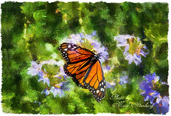 The Butterfly (Maltenburg) Tags: flowers green butterfly painting lavender digitalpainting paintedflowers butterflylanding mariealtenburg