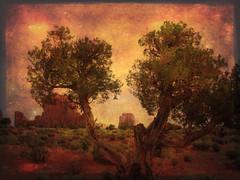 Navajo lands Texture (Swissrock) Tags: trees arizona usa tree texture america paint navajo monumentvalley navajolands utahusa magicunicornverybest