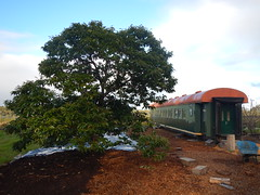 DSCN0317 (mavnjess) Tags: 1 may 2016 cripps pink lady apples orchard red black white bw sacha cin lucinda giblett cooking hibiscus compost composting compostbays chestnuts chestnut tree train carriages rainbow trolley bus trolleybus carriage