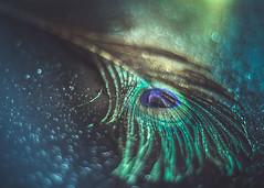 In a bubbles sea (RoCafe) Tags: pentacon pentacon50mmf18 stilllife feather bokeh blue green nikond600