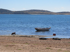 "Lac Titicaca: l'Isla del Sol et ses cochons <a style=""margin-left:10px; font-size:0.8em;"" href=""http://www.flickr.com/photos/127723101@N04/28520274321/"" target=""_blank"">@flickr</a>"