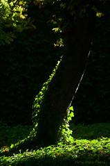 Aura ... ( P-A) Tags: chteaudechenonceau valledelaloire francecentrale visite vacances repos fatigue soleil canicule beaut photos simpa