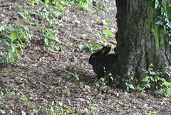 DSC_3352 (mavnjess) Tags: 15 june 2016 vicenza italy italia coniglio coniglios rabbit rabbits bunny bunnies