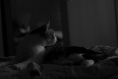 what's that noise? (pepe amestoy) Tags: blackandwhite indoor cats elcampello spain fujifilm xe1 carl zeiss t planar 250 zm