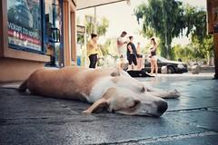 relaxing (.martinjakab) Tags: tier animal schlafen lazy streetphotography travelphotography crete heraklion iraklio fujifilm x100t sleeping hund dog