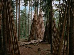 Hjrnered, July 2016 (magastrom) Tags: 645 film analog mamiya mediumformat kodakportra400 epson v700 forest landscape sweden laholm halland hjrnered vuescan