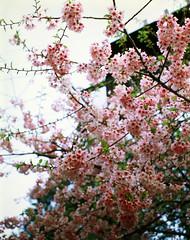 (lovelyivan) Tags:  taiwan  asia  yilan   wista fielddx 45dx cherrywood schneider kreuznach aposymmar 56150 kodak e100vs e6 film 4x5