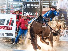 Bareback Riding (ildikoannable) Tags: barebackriding bareback cowboy rodeo olympus lumix action criticalmoment decisivemoment