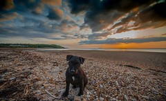 My boy Sam at Thorness bay.. (Graham Hendey) Tags: isleofwight thornessbay 1635vr nikon sunset beach dog