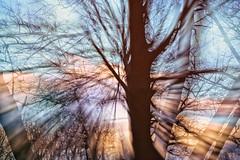 Forest Exposure 1 (Dan @ DG Images) Tags: fractal foliage trees shrubs overhead blur filter modified wallpaper white dark black color colour stare fun dunedin otago nz new zealand forest exposure