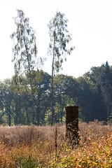 ckuchem-8310 (christine_kuchem) Tags: abholzung baum baumstumpf baumstmme bume einschlag fichten holzeinschlag holzwirtschaft kahlschag lichtung stumpf wald waldwirtschaft kahl
