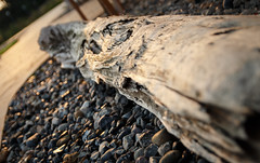 Wood on the ground (drummerwinger) Tags: rot rgen baumstamm canon700d sigam 2 8 sigma