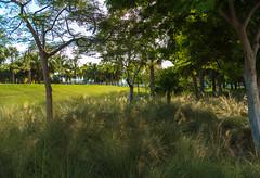 _JAM7734 (Jamil D750) Tags: miami beach south pointe park water blue skies green grass skyscrapers pier lifeguard house evening field nikon d750