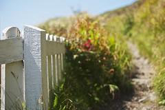 A Path Well Trodded - HFF (Nanagyei) Tags: wood cliff white fence coast bush cornwall hiking path walk tight friday narrow coastalpath wodden mullion a700 thispathleadstosomeamazingviews