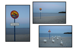 kalokairiprint2_1277 (thanasis stamatis) Tags: sea summer sky beach swimming swan nikon triptych summertime cygnus thanasis stamatis shizune cycnus thanasisstamatis