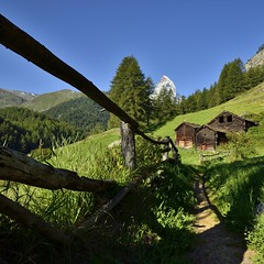 sunny morning (pierre hanquin) Tags: blue trees light summer sun mountain mountains alps color colour tree green nature colors forest montagne alpes landscape geotagged switzerland soleil nikon europa europe colours suisse couleurs swiss vert clear bleu ciel arbres zermatt matterhorn grün blau helvetia svizzera été paysage landschaft arbre wallis couleur forêt ch valais montagnes cervin cervino 1685 1685mm d7000 1685mmf3556gvr hanquin