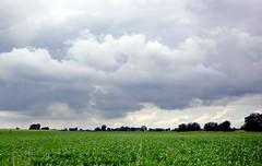maisveld (Gerda Le Blanc) Tags: nature clouds landscape meadows