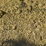 River bed thumbnail