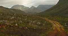 The Park Road (david.gill12) Tags: southafrica kogelbergnaturereserve