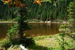 Moose Habitat (Let Ideas Compete) Tags: rocky mountains national mountain park colorado rockies trail hike scenic rmnp nature nationalpark rockymountains therockies high country highcountry wilderness lake pond tarn hikerhabitat naturaleza