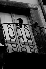 Something simple (AlessiaNina) Tags: bw monocromo balcony uccelli balcone orvieto monocrome piccioni volatili