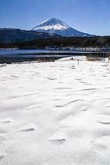 Winter Fuji view from Lake Saiko (shinichiro*) Tags: 20160125sdim0245 2016 crazyshin sigmasd1merrill sd1m sigma18300mmf3563dcmacrooshsm fuji daylight  yamanashi japan january winter snow