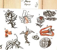 1604 ( ) Tags: 365   plants   sketches brushpen   zigartgraphictwin  flowers  ink