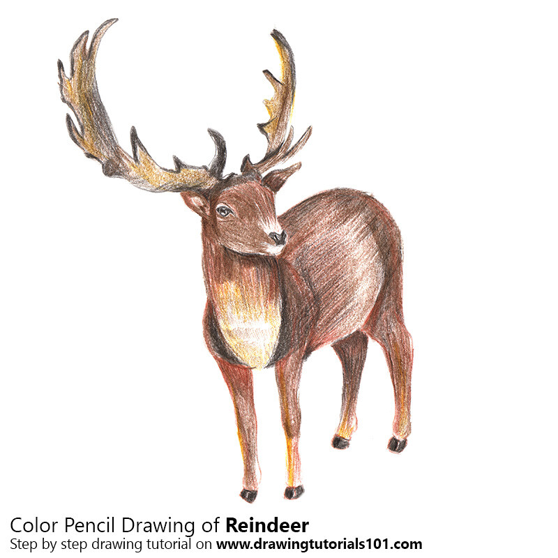 how to draw a reindeer with color pencils time lapse reindeer are of the
